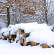 Winter landscape with firewoods covered snow - Stock Photo
