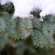 Branch of fir-tree is with snow close — Stock Photo