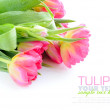Tulip flowers isolated on white — Stock Photo #9668759