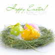 Colourful easter eggs are in a nest on a white background — Stok fotoğraf
