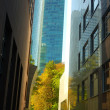 Autumn in business center Frankfurt am Main, Germany — Stock Photo #9669177
