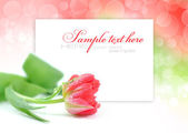 One pink tulip on festive background with space for text — Foto de Stock
