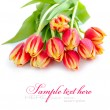 Stock Photo: Tulip flowers isolated on white