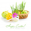 Composition from easter eggs and green sprouts in an egg on a white background — Stock Photo
