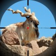 markhor — Stock Photo #8249813