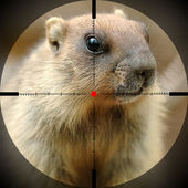 Beautiful marmot — Stock fotografie