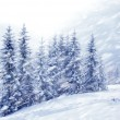 Beautiful winter landscape with snow covered trees — Stock Photo #8349618