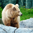 Bear on a stone - Stock Photo