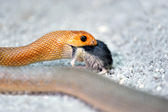 Serpente — Foto Stock