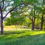Spring time Oak trees — Stock Photo #10245410