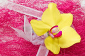 Yellow Orhid with ribbon on pink background — Stock Photo