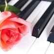 Piano and rose — Stock Photo
