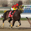 Trinniberg Wins Bay Shore Stakes — Stock Photo #9951813