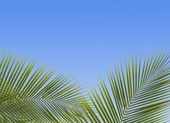 Palm trees against the blue sky — Stock Photo