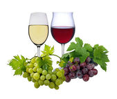 Wine spirits — Stock Photo
