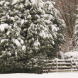 Stock Photo: Snowy forest entrance