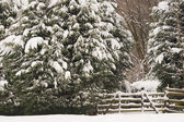 Snowy forest entrance — Stock Photo
