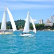 Постер, плакат: Sochi sea coast with sailing yachts