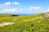 Creen hills — Stockfoto