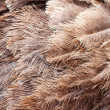 Royalty-Free Stock Photo: Ostrich feathers as a background