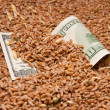 One hundred dollars in wheat — Stock Photo