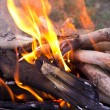 Stock Photo: Young birch branch in fire