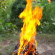 Royalty-Free Stock Photo: Fire in a brazier on the background of green forest