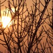 Silhouette of a willow tree with the sun behind the tree — ストック写真