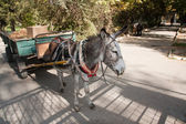 Donkey with a cart — Stock Photo
