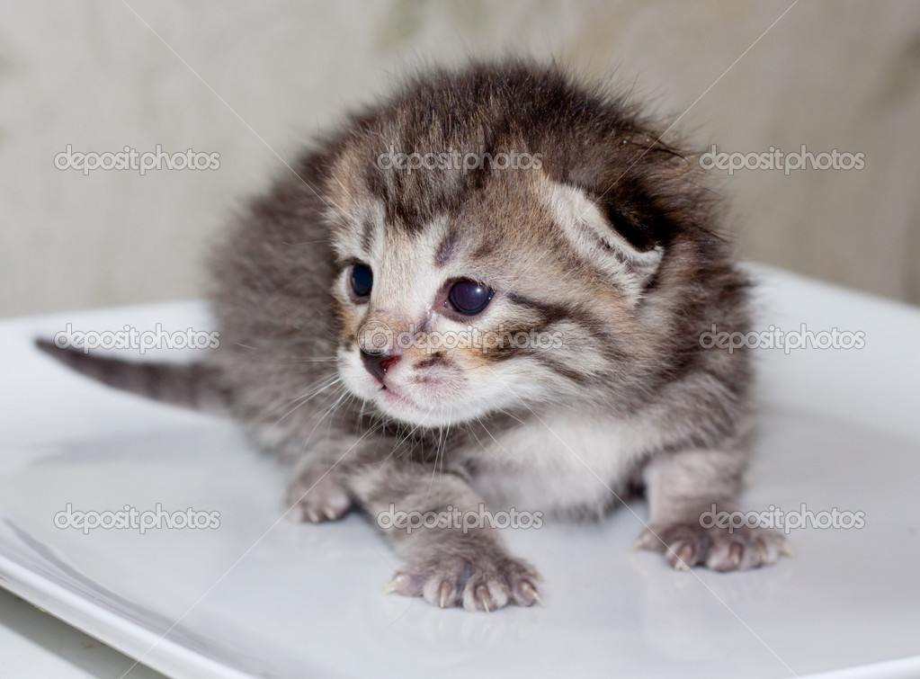 Little kitty — Stock Photo #10242378