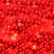 Red currant on background — Stock Photo #8310526