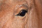 Nahaufnahme der augen eines pferdes — Stockfoto