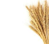 Wheat isolated on white — Stock Photo