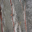 Close up view of wood. Good natural background — Foto Stock
