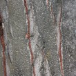 Close up view of wood. Good natural background — Stock Photo