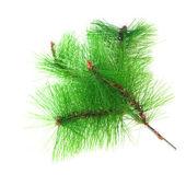 Christmas green framework isolated on white background — Stock Photo