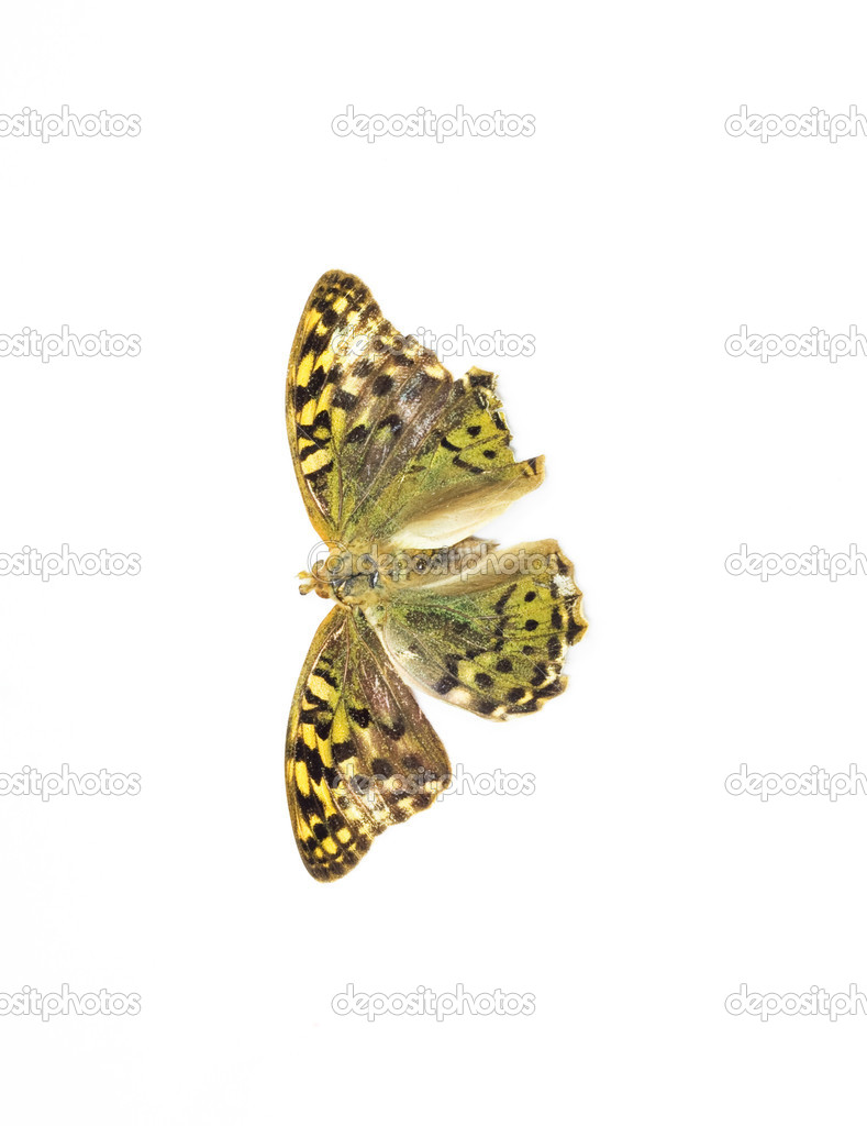 Butterfly — Stock Photo #9000894