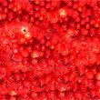 Red currant on background — Stock Photo