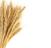 Wheat isolated on white — Stock Photo