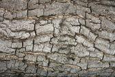 Textura da casca. — Foto Stock