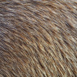 Background of Animal Fur — Stock Photo
