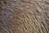 Background of Animal Fur — Stock Photo