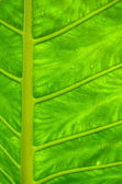 Wet Tropical Leaf — Stock Photo