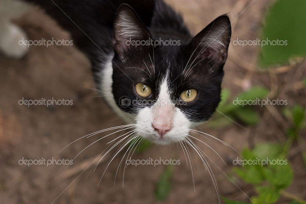 Cute cat — Stock Photo #8154272