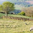 Стоковое фото: North York Moors National Park, North Yorkshire, England