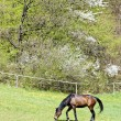 Horse on meadow — Stock Photo #10480821