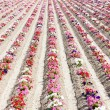 Flower field — Stock Photo