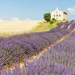 Chapel with lavender and grain fields, Plateau de Valensole, Pro — 图库照片
