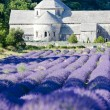 Senanque abbey with lavender field, Provence, France — Foto de Stock