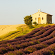Chapel with lavender and grain fields, Plateau de Valensole, Pro - Stok fotoğraf